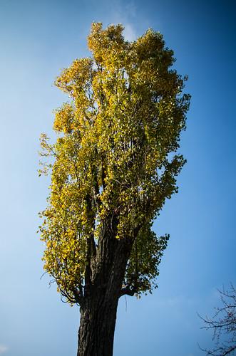autumn-20