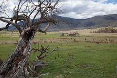 Green - while it lasts (Geoff Main) Tags: landscape nationalpark australia hut act orroralvalley canonef24105mmf4lisusm namadginationalpark orroralhomestead canon6d