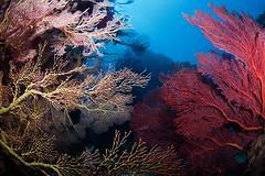 IMG_8194 (Andrey Narchuk) Tags: wild animal coral magazine marine underwater story reef wildmagazine