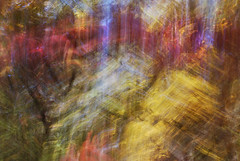 DSC_0612 (AC Fisher) Tags: longexposure autumn trees sunlight lightpainting abstract fall lights surreal cameratoss lightplay intentionalcameramovement