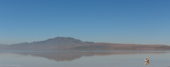 Great Salt Lake (Thomas Frejek) Tags: usa utah antelopeisland saltlakecity greatsaltlake hooper 2013 grosersalzsee