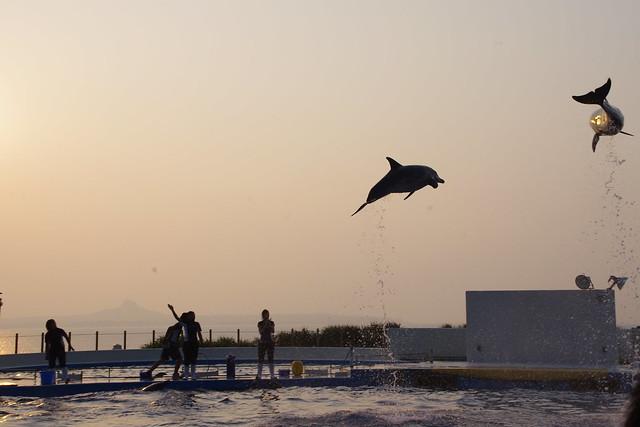 海の夕日をバックにイルカショー|沖縄美ら海水族館