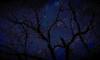 one deep mood (LauraSorrells) Tags: blue winter sky painterly abstract tree mystery dark digitalplay branches deep enigma february magical stillness 2009 otherworldly fortmountain gahuti