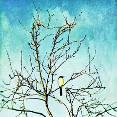 ♪   tweet   ♪ (1crzqbn) Tags: blue sunlight bird texture lensbaby square bokeh 7d composer magicunicornmasterpiece 1crzqbn ♪tweet♪