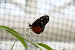 Same procedure as every year (im_fluss) Tags: butterfly mnchen mariposa schmetterling botanischergarten