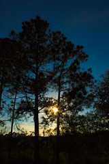Pining for the sun... (Lazy_Artist) Tags: vacation sun tree pine florida random