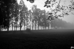 Corsetta solitaria (Riccardo Brig Casarico) Tags: life autumn light bw italy parco love nature colors fog wow photo nikon europa europe italia day foto milano best nebbia autunno colori lombardia nord brig monza riki d5100 nikond5100 brigrc