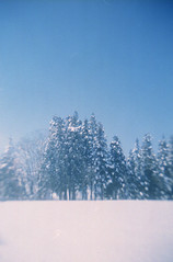 (.) Tags: winter sky snow nature japan forest