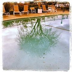 #pool #reflection #tree #chairs #novato #lynnfriedman (Lynn Friedman) Tags: square penelope squareformat novato lordkelvin lynnfriedman 94949 iphoneography instagramapp uploaded:by=instagram