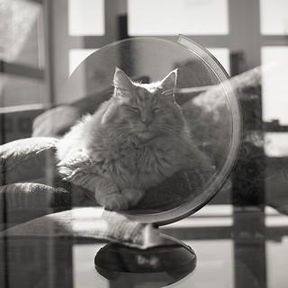 Global cat