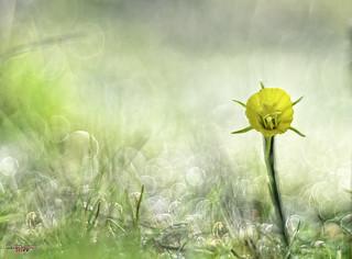 primaverando
