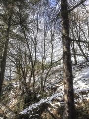 Nieve_02 (JC Arranz) Tags: españa barcelona nieve paisaje bosque cataluña montaña iphone6s castellardenhug