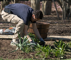 20170405-AMS-LSC-2188 (USDAgov) Tags: usda departmentofagriculture usdepartmentofagriculture peoplesgarden nationalmall washington dc planting seed sprout tools soil garden transplant plant align spring coolweather