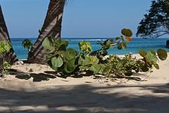 Beach Garden (smilla4) Tags: beach palmtrees plants flowers sand shadows blue caribbean ochorios jamaica