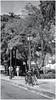 Kodak Brownie Autographic 2A (1916) (Samy Collazo) Tags: kodakbrownieautographic2a1916 kodar122mmf79 aristaedu400 lightroom3 nik silver efex pro 2 sanjuan oldsanjuan viejosanjuan puertorico bn bw streetphotography fotografiacallejera
