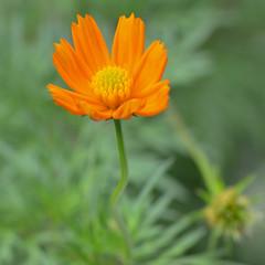 DSC_0562 (Kelson Souza) Tags: flor flores flower jardim jardinagem