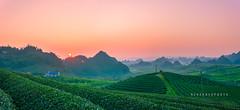 H 7516-7525 Tân Lập,Mộc Châu 0217 (HUONGBEO PHOTO) Tags: bìnhminh sunrise sơnla mộcchâu tâybắc northvietnam teahill countryside ef100400mmf4556lis layerofmountains panorama caonguyênmộcchâu phongcảnhviệtnam mocchauhighlands hightland mocchaulandscape vietnamlandscape vietnamscenery peaceful green layers mountains outdoor scenery landscape cảnhquan layer highlands