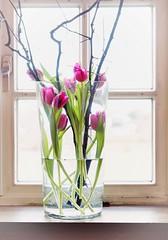 tulips (II) (pix-4-2-day) Tags: tulips vase tulpen fenster window high key pink frame water rahmen fensterrahmen sprossenfenster fensterbank windowsill green grün zweige bright hell wasser glas glass pane glazingbars transom muntin flowers blumen schnittblumen stilllife stillleben pix42day