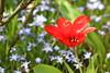 garden (dr.larsbergmann) Tags: flickr nature photography photo eos flowers flora languageofflowers flower garden