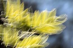 Macro Mandays - Intentional Blur (Ramunė Vakarė) Tags: intentionalblur macromondays rowan sorb spray leaf blur line wiggle nature lithuania eičiai ramunėvakarė abstract