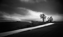 --- (iker_oa) Tags: mono black white blanco negro tree camino arbol contraste contrast clouds