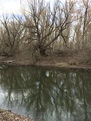 IMG_0580 (augiebenjamin) Tags: lakeviewparkway lakeshoredrive provo utah mountains provorivertrail trees spring winter spanishfork nebo bicentennialpark oremcity provocity utahvalley utahcounty oremarboretum