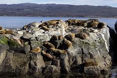 Isla de los Lobos (Mari Sosa) Tags: ushuaia tierra del fuego landscape nature lobos marinos