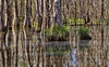 Down-Swamp (msuner48) Tags: d750 acr5 cs4 swamp slidelllouisiana water reflections trees grass nature wildlife tour topazlabs nikcollection nikonafs24120mmf4ged