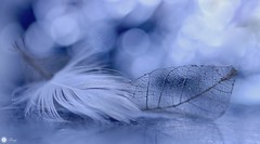 Forever yours... (Trayc99) Tags: feather bokeh leaf together beautyinnature beautyinmacro delicate decorative macro closeup