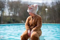 8-7530 (Ijsberen-Boom) Tags: boom ijsberen kzcyboom doop swim zwemclub zwemmen vlaanderen belgium