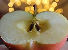 Apple's Seeds ... (MargoLuc) Tags: macromondays theme memberschoiceseeds apple red fruit macro golden bokeh seeds