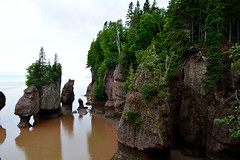 Hopewell Rocks (Low Tide) (TheNovaScotian1991) Tags: hopewellrocks lowtide trees forest woods beautiful colorful bayoffundy flowerpotrocks provincialpark canada maritimes water reflection elephantrock nikond3200 kitlens 1855mm cliffs seastacks summer landscape