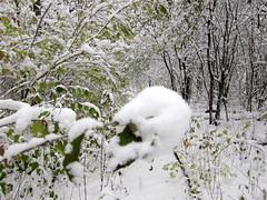 IMG_2824 (sjj62) Tags: s90 snow snowscape lith lakeinthehillsil winter winterscape