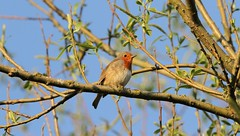Robin at pump house. (Jacko2nd) Tags: robin wildlife winter gardenbirds redbreasted 7d tamronsp150600mmf563divcusdaoll