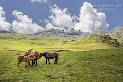 Portalet (javiruiz) Tags: caballo pirineos huesca portalet montaña naturaleza paisaje vacaciones javiruiz javierruiz javierruizherrera manada francia elsitiodemirecreo