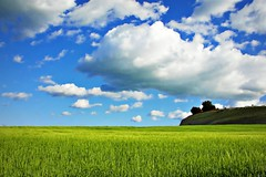 Maravilloso Mundo (Helena de Riquer) Tags: primavera spring printemps natura nature naturaleza naturalesa field camp anoia provinciadebarcelona flickr paisaje landscape outdoor april abril zeiss countryside country sky ciel cel campo catalunya cataluña louisarmstrong whatawonderfulworld topf25 interestingness helenaderiquer topf50 carlzeiss topf75 catalonia catalogne montmaneu nationalgeographic lonelyplanet europa europe paisatge paysage paisagem land topf100 100faves springtime sony sonydsch20