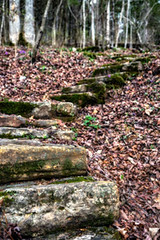Woodland Stairs (Jae at Wits End) Tags: stairs nature architecture up moss upwards shape curve arc flight green line lookingup rise rising sky staircase steps treads