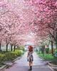 Explore· Dream· Discover· (www.juliadavilalampe.com) Tags: vienna austria pink spring frühling selfportrait autorretrato me chaulafanita europe travel destination primavera city lifestyle