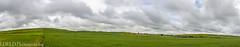 NT3.0033-CW1605618_38613-Pano (LDELD) Tags: palouse uniontown washington unitedstates us wheat spring green