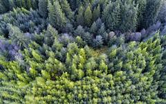 Can't see the Woods? (J McSporran) Tags: scotland lochlomondandtrossachsnationalpark trossachs forest landscape