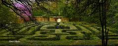 Historic puzzle (Tom Slate) Tags: colonialwilliamsburg virginia gardenmaze garden governorspalace green puzzle history williamsburgvirginia historicwilliamsburg springtime springinvirginia