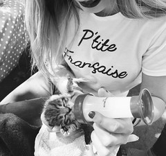 L'heure du biberon (gosselinclara) Tags: chaton life cute newborn feed babybottle milk kitten lait bébé bibi little pet girl french baby cat