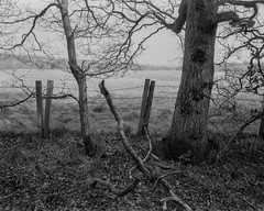 Trees Fence and Branches (Jonathan Carr) Tags: trees landscape rural northeast black white bw 4x5 5x4 largeformat toyo45a monochrome fence branches