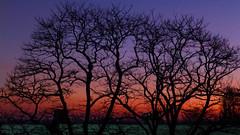 Lever du jour (jeanfenechpictures) Tags: matin morning mañana amanecer sunrise leverdujour arbre tree árbol horizon horizonte soleil sun sol ciel sky cielo couleurs colors colores bleu blue azul orange naranja ville town ciudad branches rama bough jeanfenech