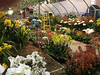 2017-03-09_093i_waldor (lblanchard) Tags: 2017flowershow displaygarden waldor