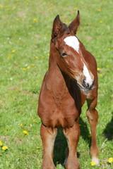 Fohlen (digitalsucher) Tags: ricoh rikenon p 50mm14 5014 pk manuallens vintage boke panasonic csc dslm dmcg80 dmcg81 dmcg85 g80 g81 g85 tier horse pferd fohlen