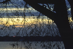 974-100 (George Hamlin) Tags: ohio bay view lake erie water twiight evening willow tree silhouette sky clouds band light branches photo decor george hamlin photography shadow color