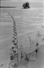 Scan-170411-0044 (beedriver) Tags: film analog fed industar50 fomapan