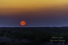 Refuge Sunrise (rebeccalatsonphotography) Tags: sun sunrise bnwr brazoria nationalwildliferefuge wildliferefuge rebeccalatsonphotography morning wetlands colorful globe orange solar canon telephoto 400mm tx texas