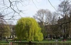 14-IMG_0608 (hemingwayfoto) Tags: baum deutschland europa frühling hannover landeshauptstadt maschpark niedersachsen norddeutschland trauerweide